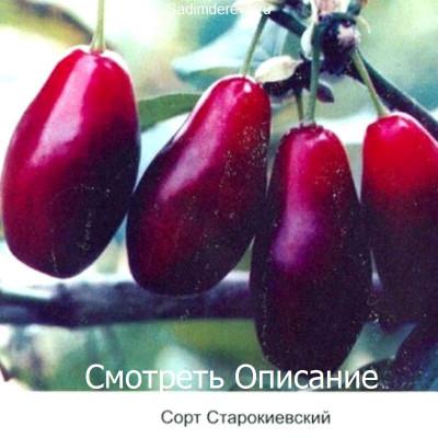 Кизил Старокиевский